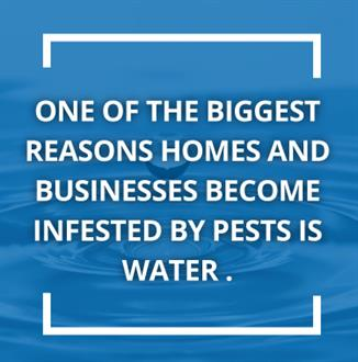 water encourages pest infiltration