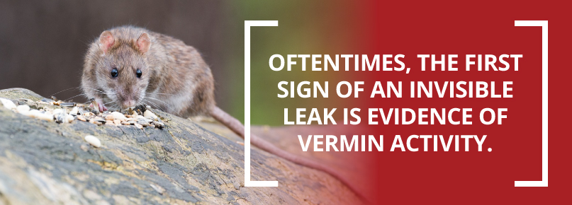 vermin activity from sewer leak