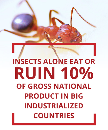 insects ruin or eat 10 percent of the GNP