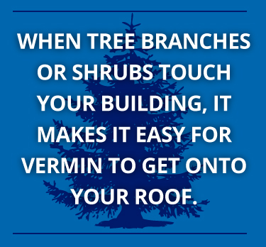 vermin access your roof when tree branches touch it