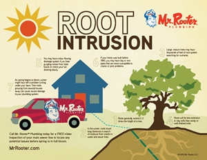 Root Intrusion Infographic
