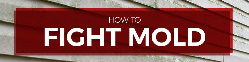 how to fight mold