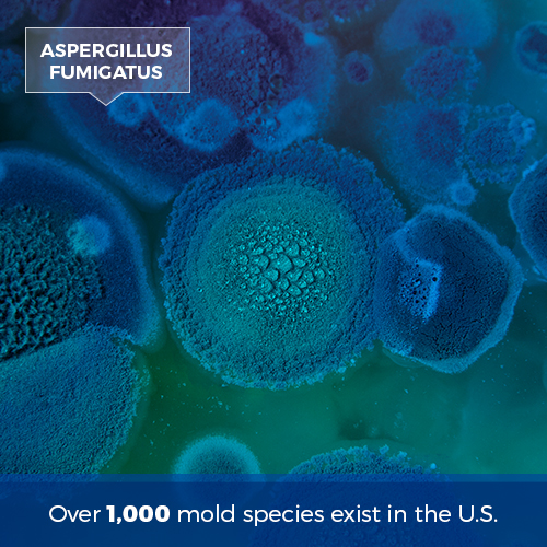 over 1,000 species of mold exist in the US