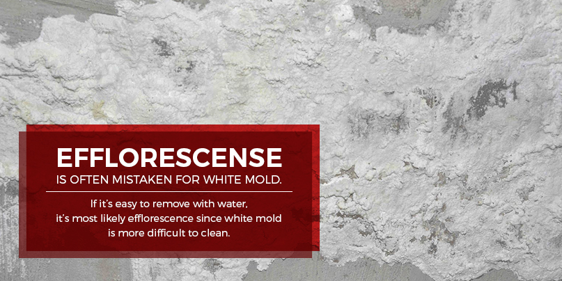 efflorescence is mistaken for mold