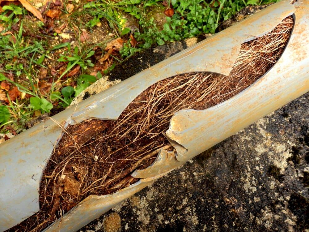 Повреждение корня дерева в трубе